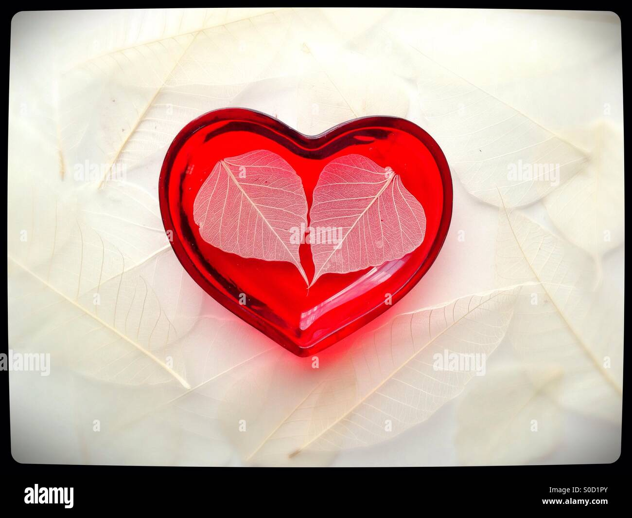 Two white leaves in a heart shaped bowl surrounded by other leaves. - Stock Image