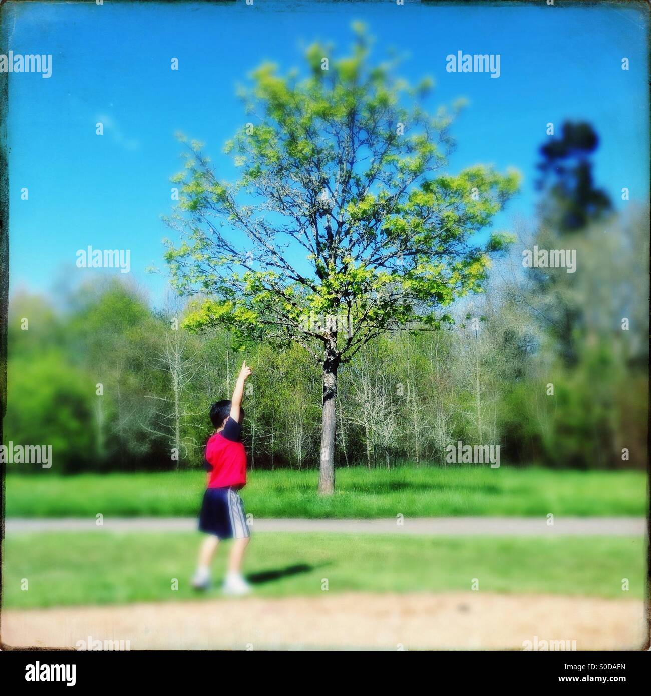 Young boy pointing up at tree on a sunny day. - Stock Image