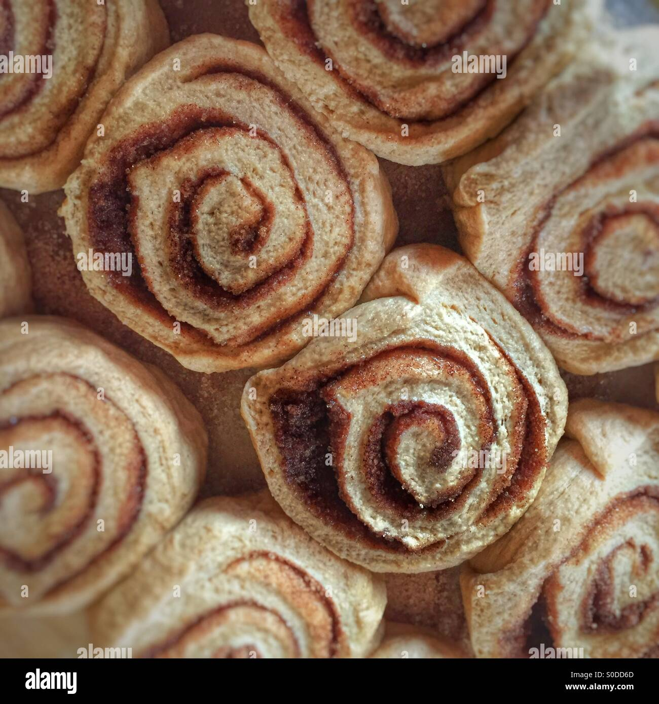 Pan of homemade unbaked cinnamon rolls ready to be baked in the oven - Stock Image