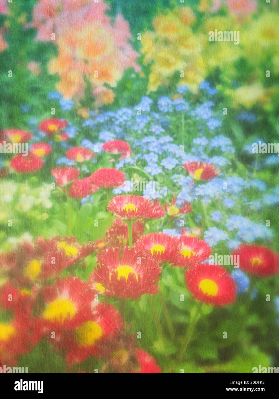 Spring flower garden with red daisies, blue forget-me-nots and yellow, pink and peach snapdragons. Vintage painterly Stock Photo