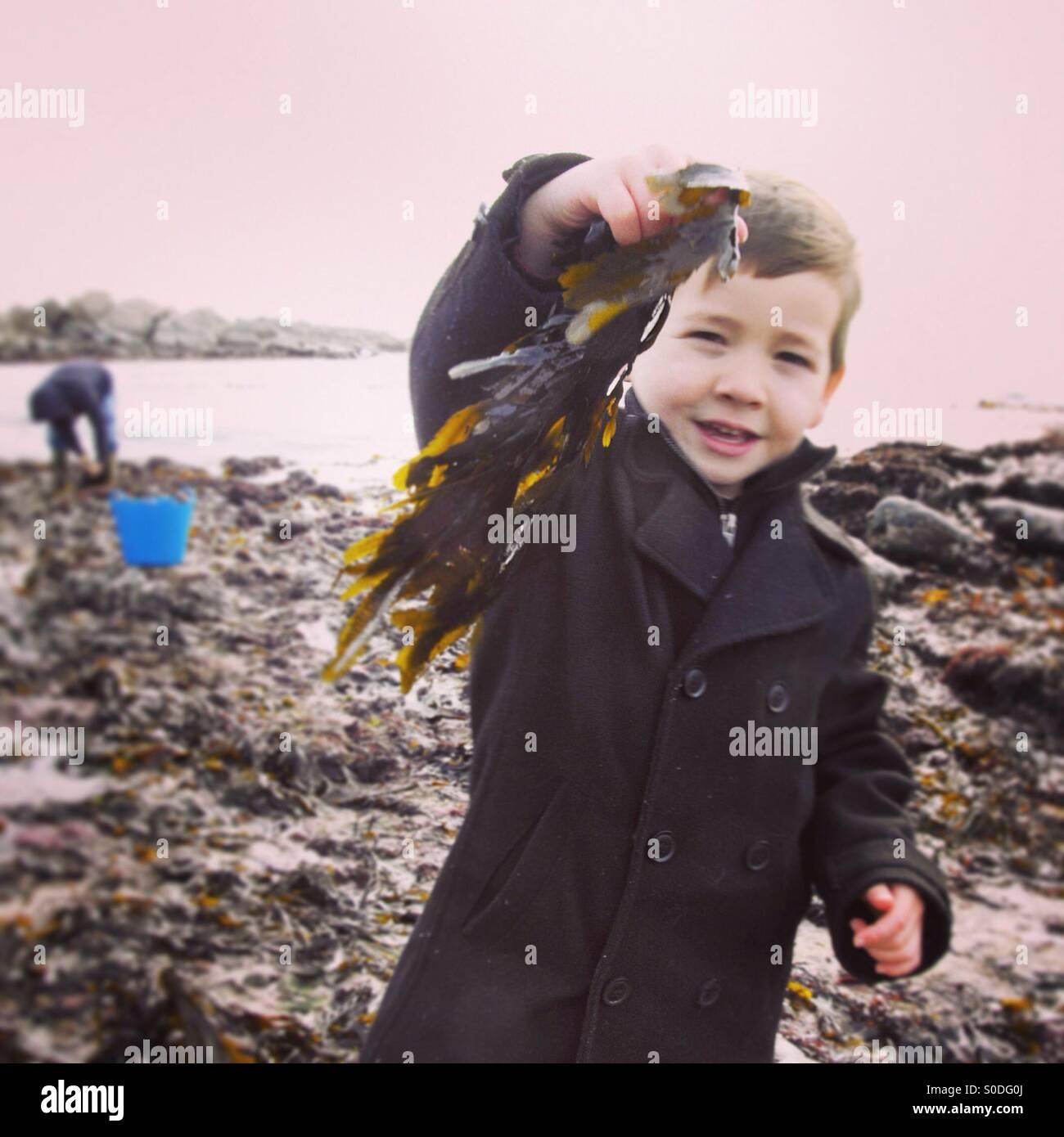 Seaweed foraging Stock Photo