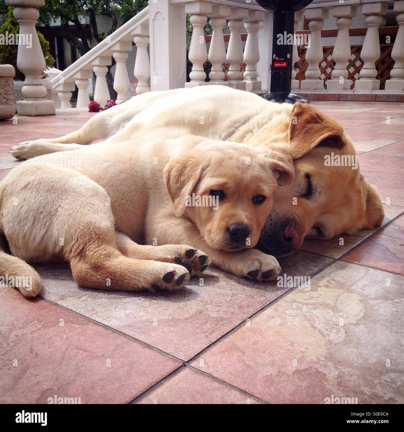 Pup love - Stock Image