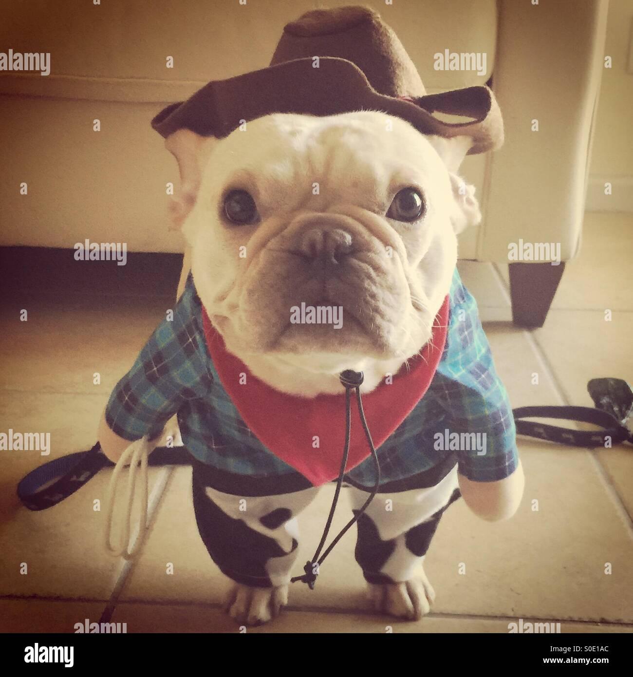 cowboy frenchie