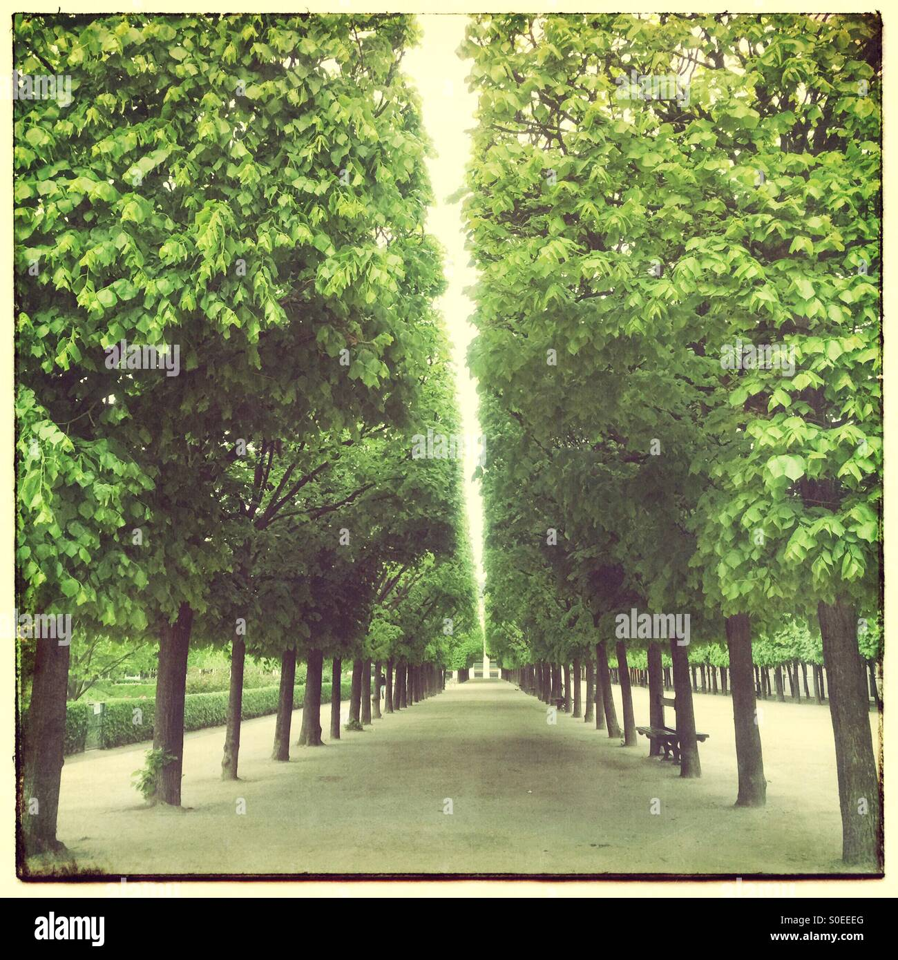 Rows of trees at Jardin du Palais-Royal in Paris, France. Vintage frame and warm, retro, faded look.Stock Photo
