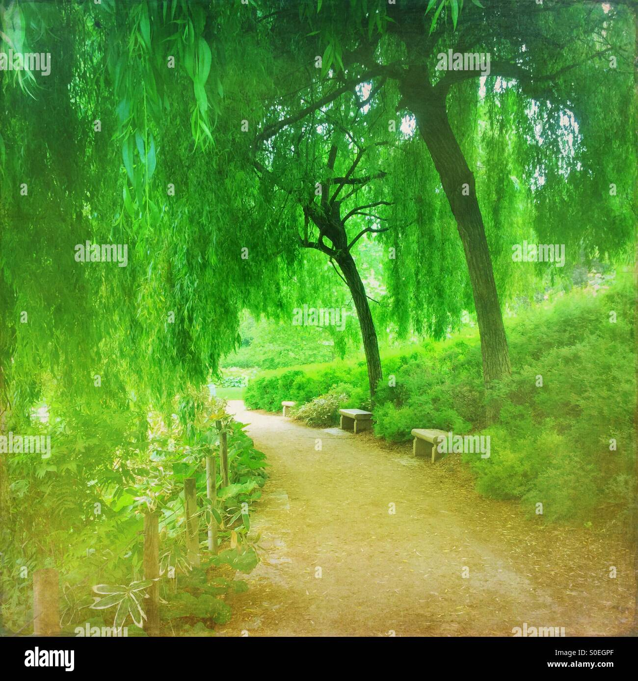 Verdant green Parc de Bercy with weeping willow trees and fresh Spring foliage in Paris, France. Vintage texture Stock Photo