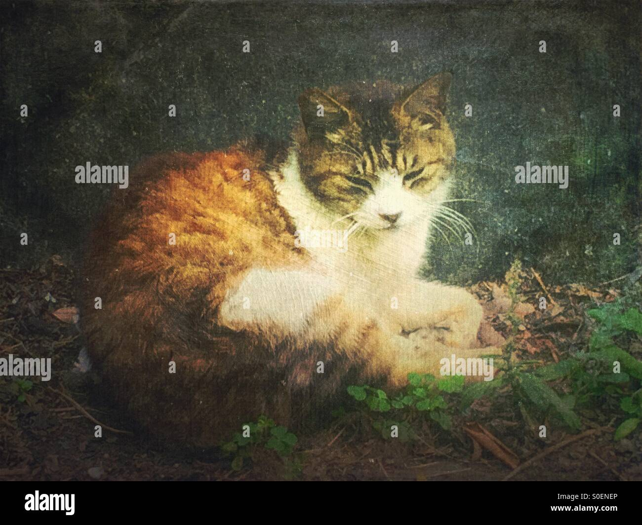 White and brown alley cat sitting in front of a rock and looking sleepy. Vintage painterly texture overlay.Stock Photo
