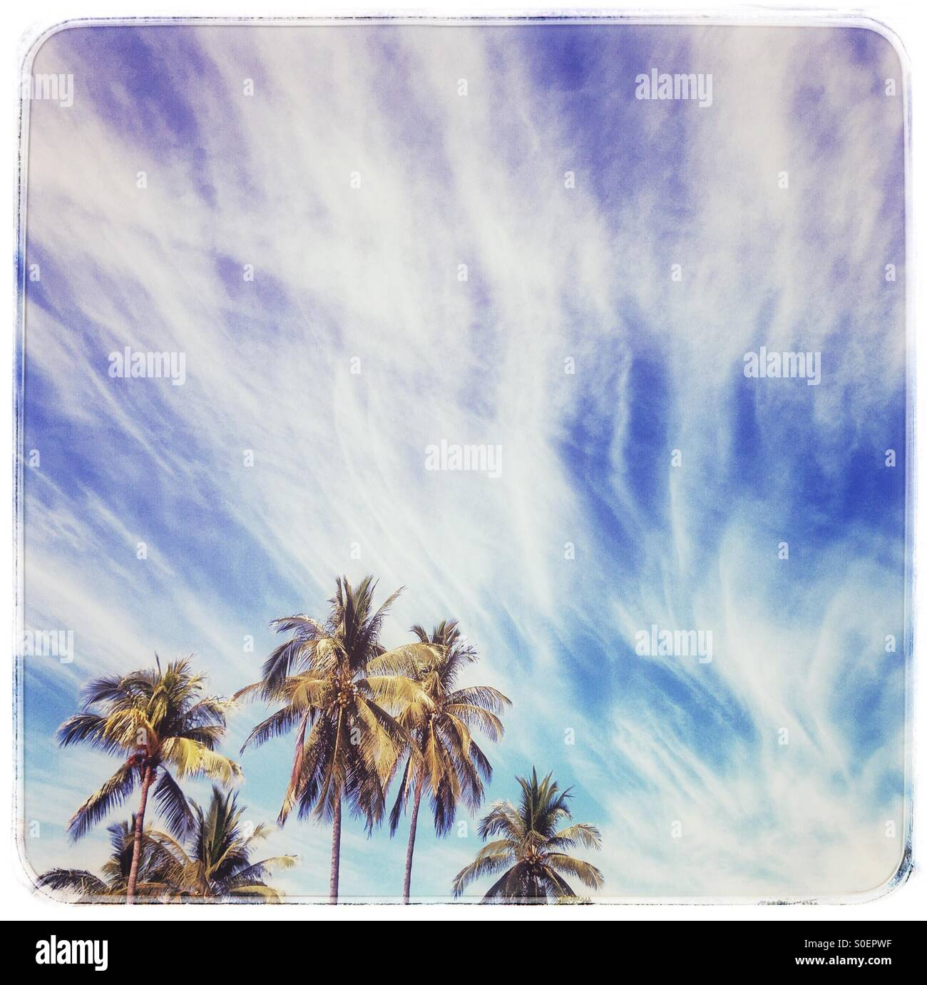 Palm trees reach upward toward a dreamy and beautiful sky filled with swirls of clouds. - Stock Image