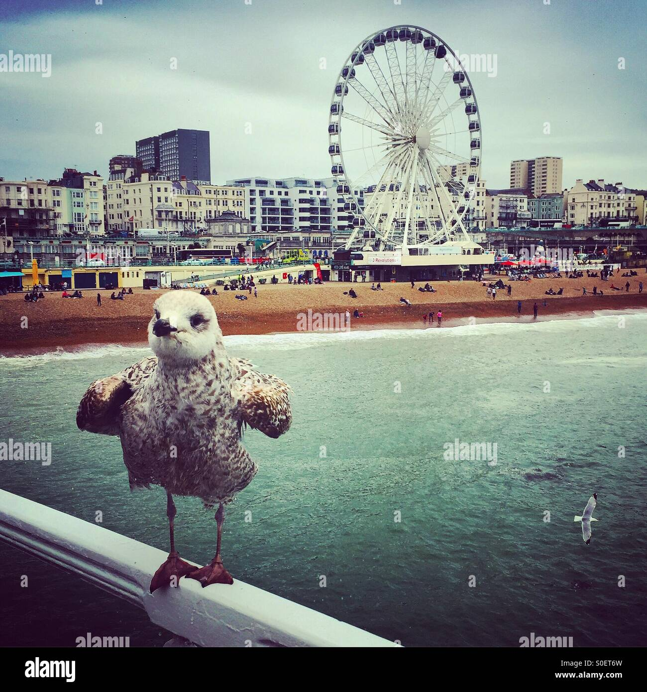Seagull on Brighton Pier - Stock Image