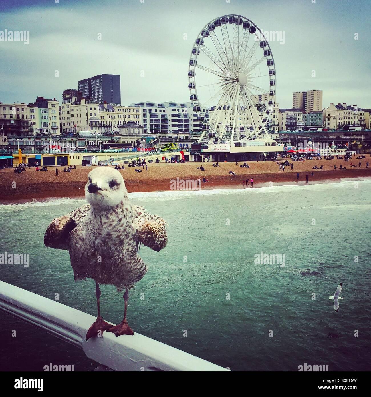 Seagull on Brighton Pier - Stock Image