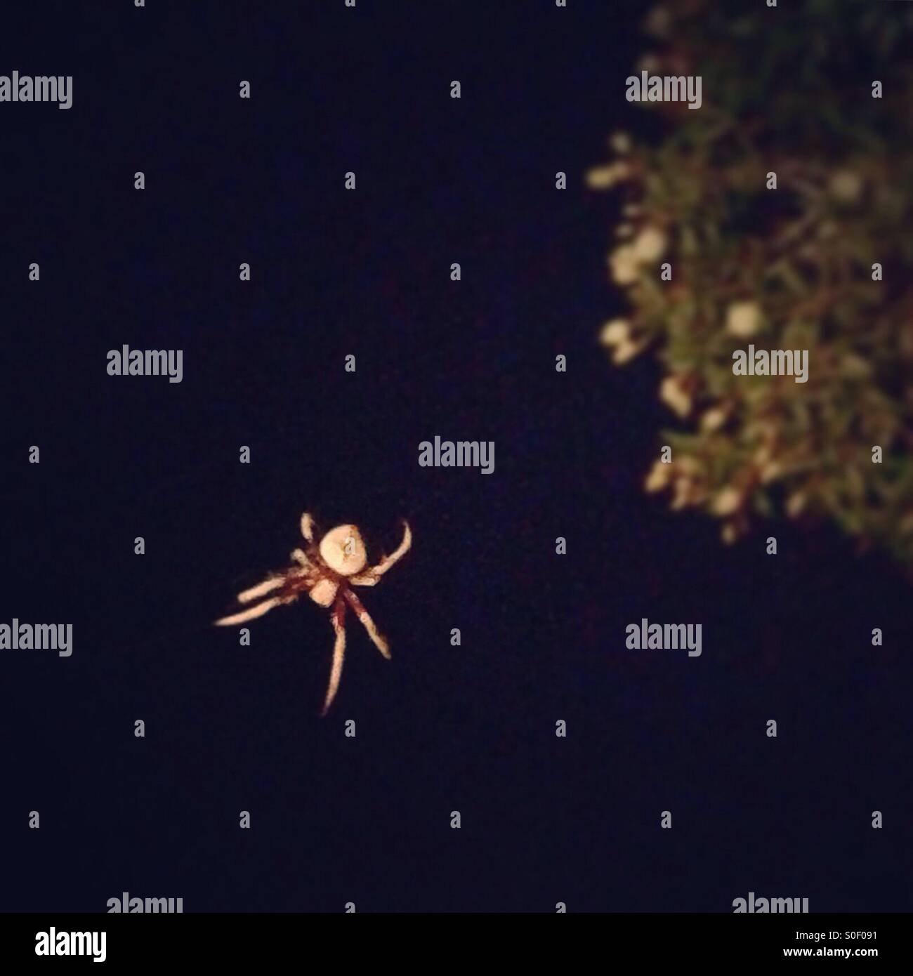 Spider In The Night - Stock Image