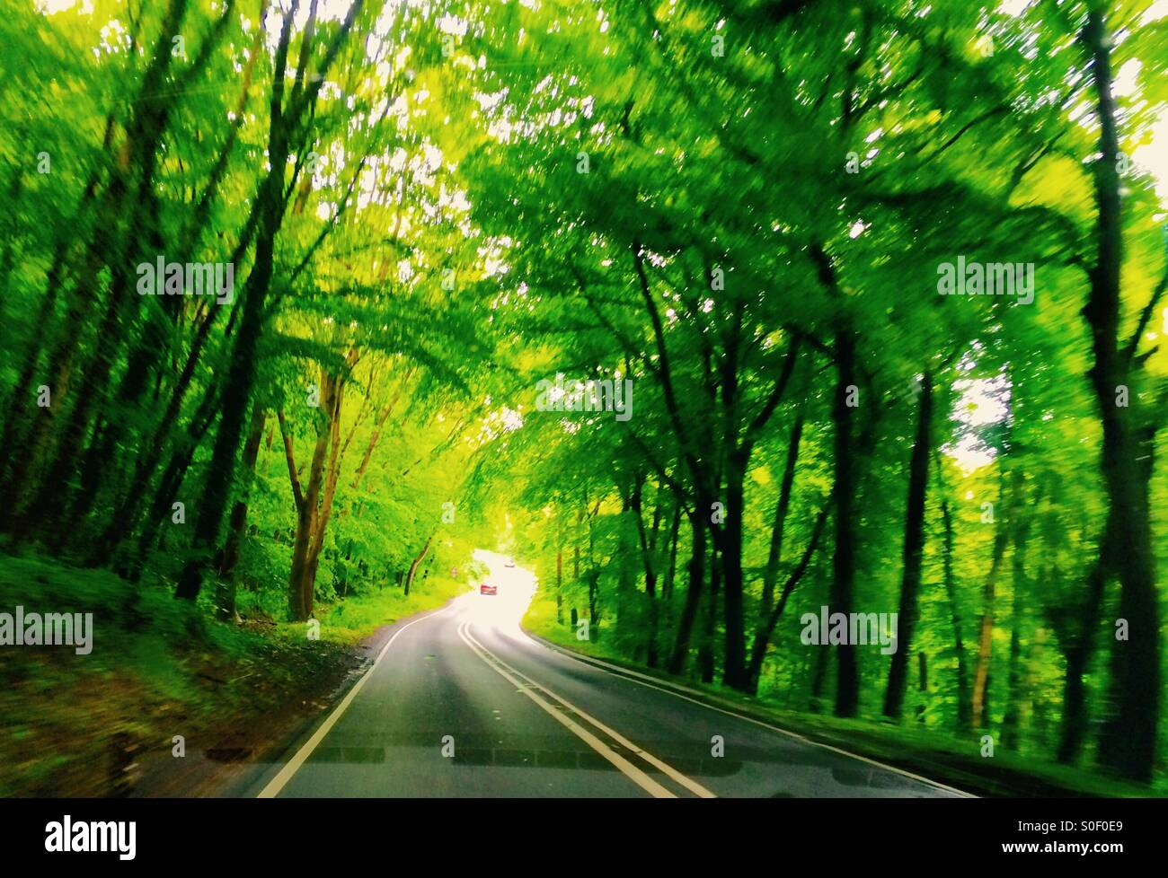 Tree tunnel. - Stock Image