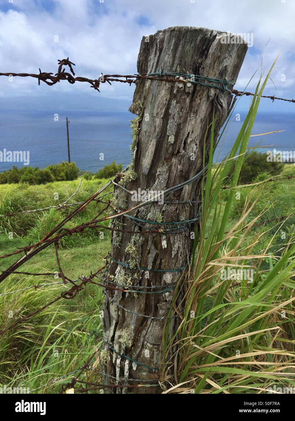 The old fence post - Stock Image