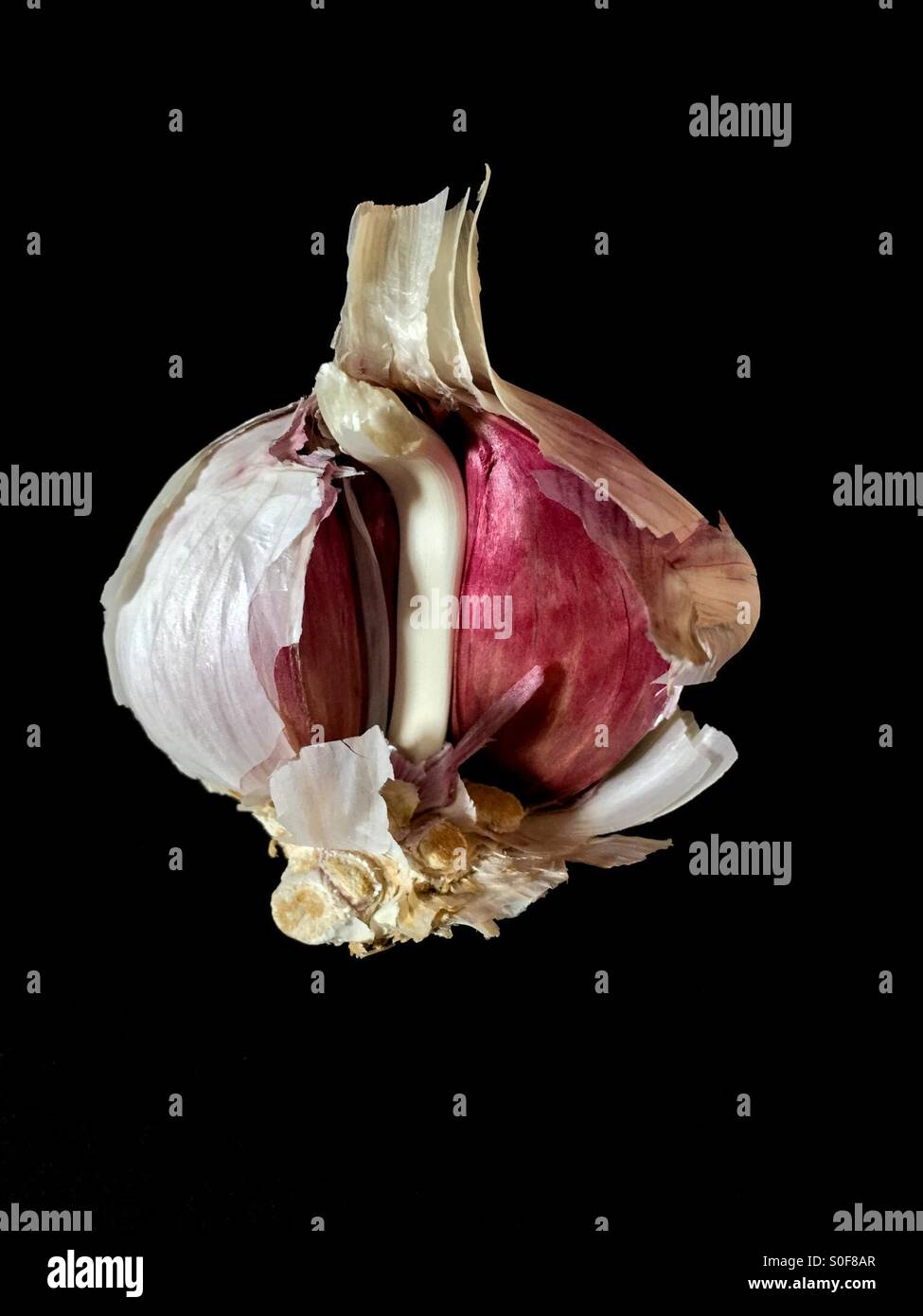 A Opened Garlic Bulb - Stock Image