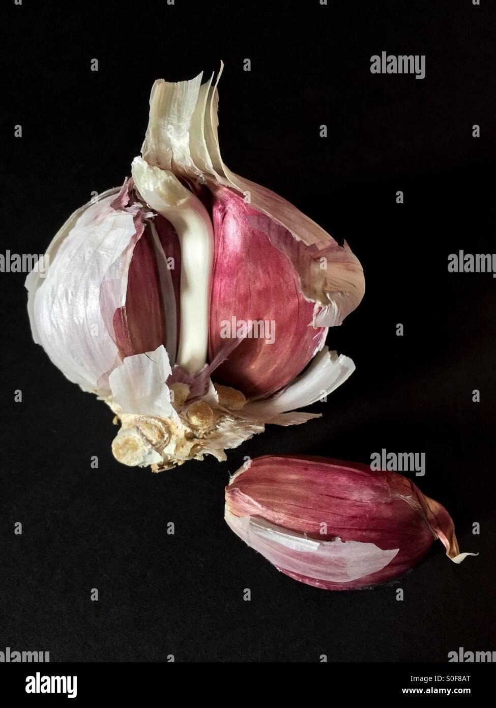 Garlic Bulb open with garlic bulb segment lying down Stock Photo