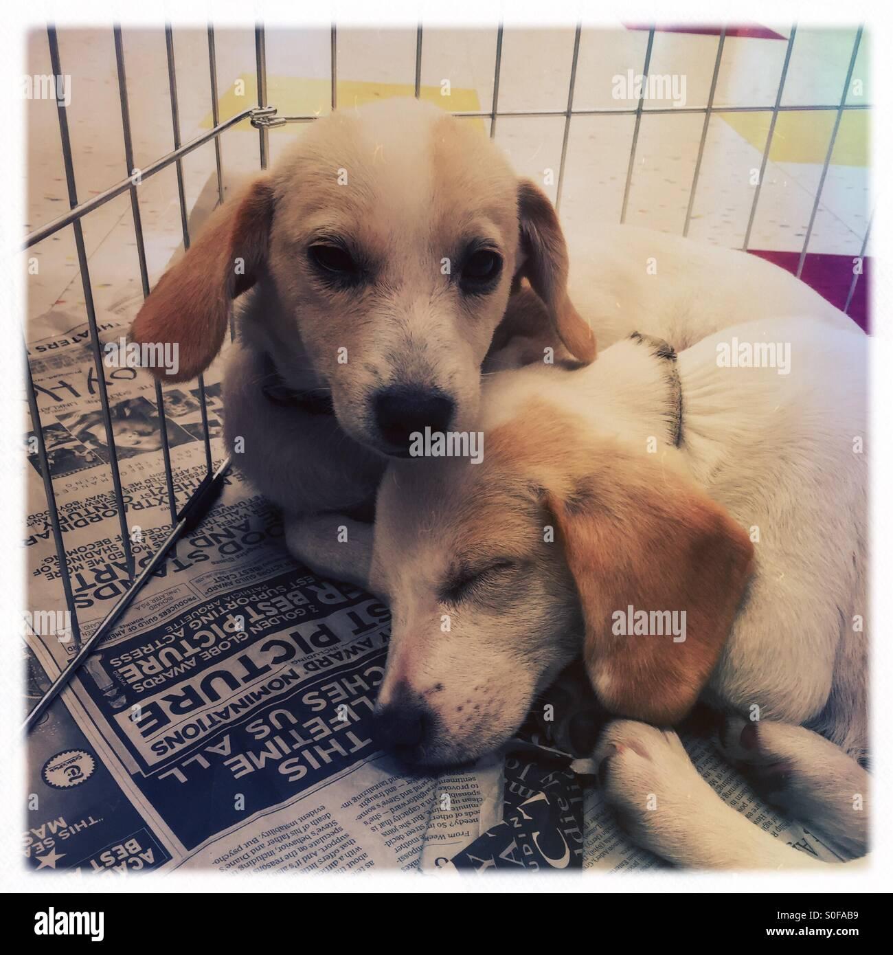 Puppy Love Stock Photo: 310124061 - Alamy