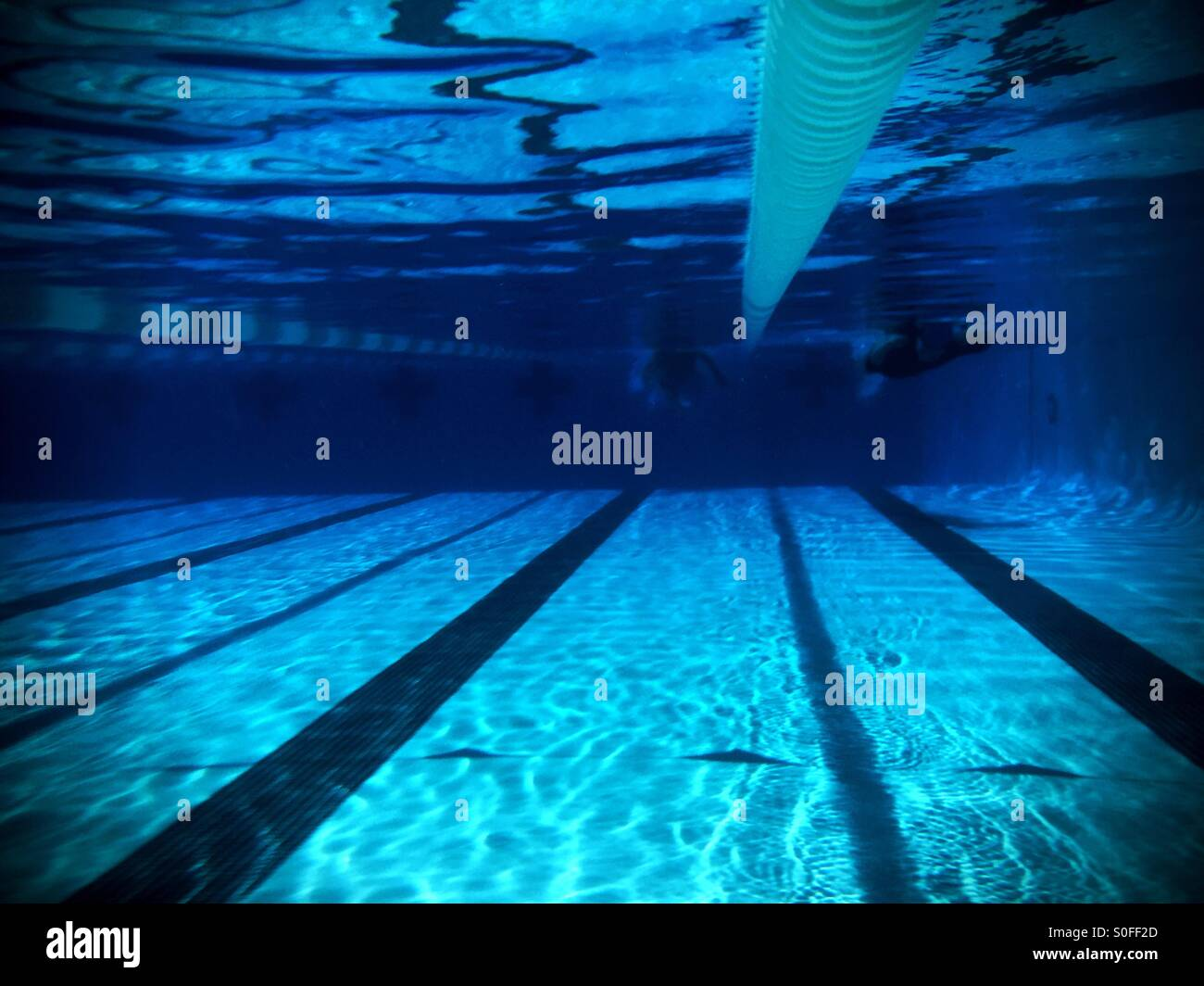 Olympic size pool stock photos olympic size pool stock - How far is 50 lengths of a swimming pool ...