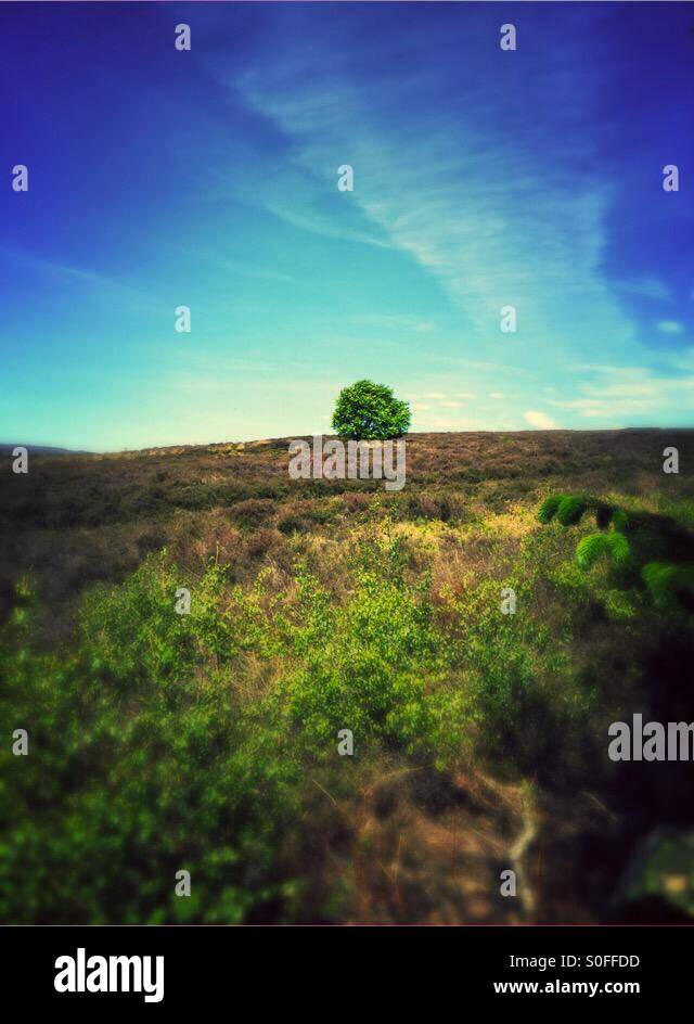 Tree On The Horizon - Stock Image