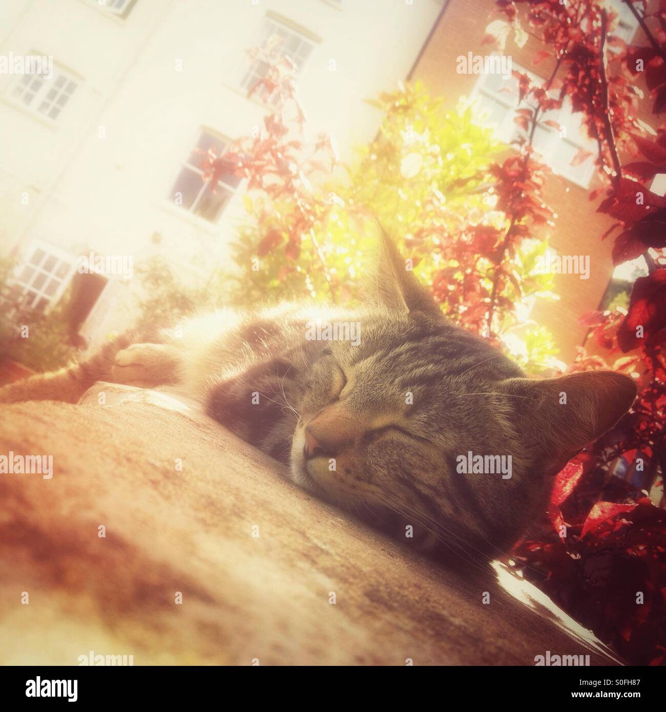 Cat snoozing in the sun - Stock Image