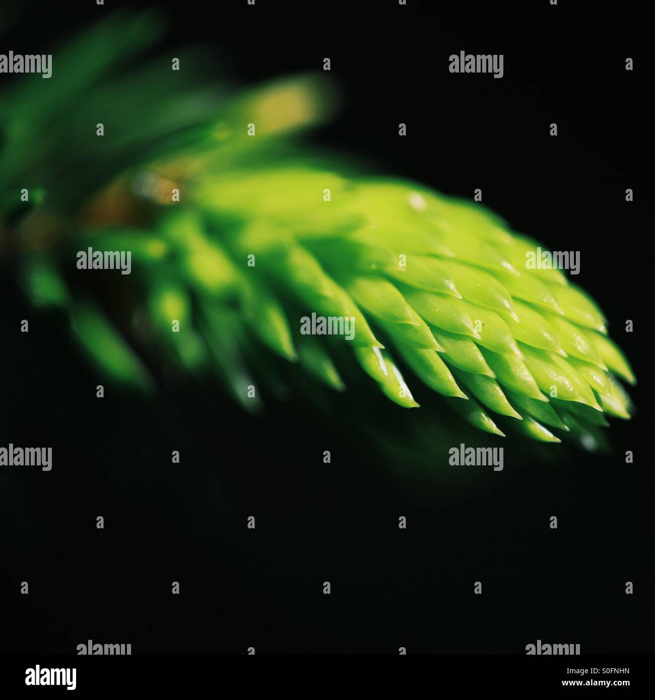 New growth - Stock Image