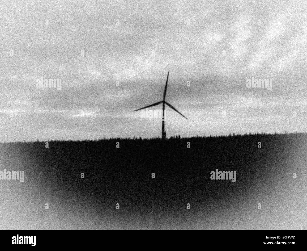 Wind turbine in field of wheat - Stock Image
