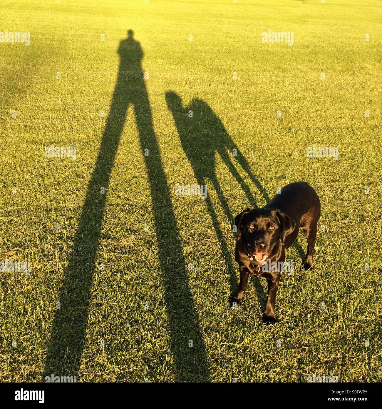 Long shadows of man and dog - Stock Image