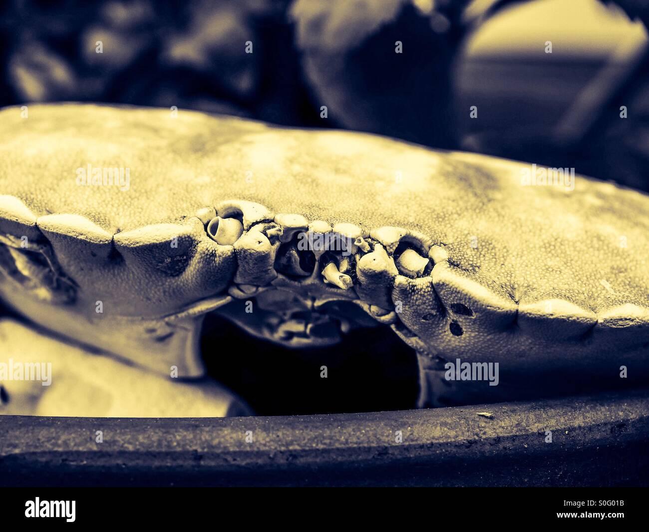 Crab shell - Stock Image