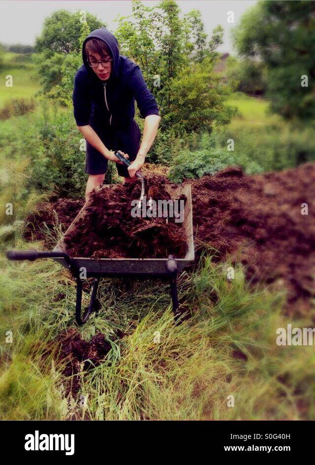 Young man loading a wheelbarrow with horse manure - Stock Image