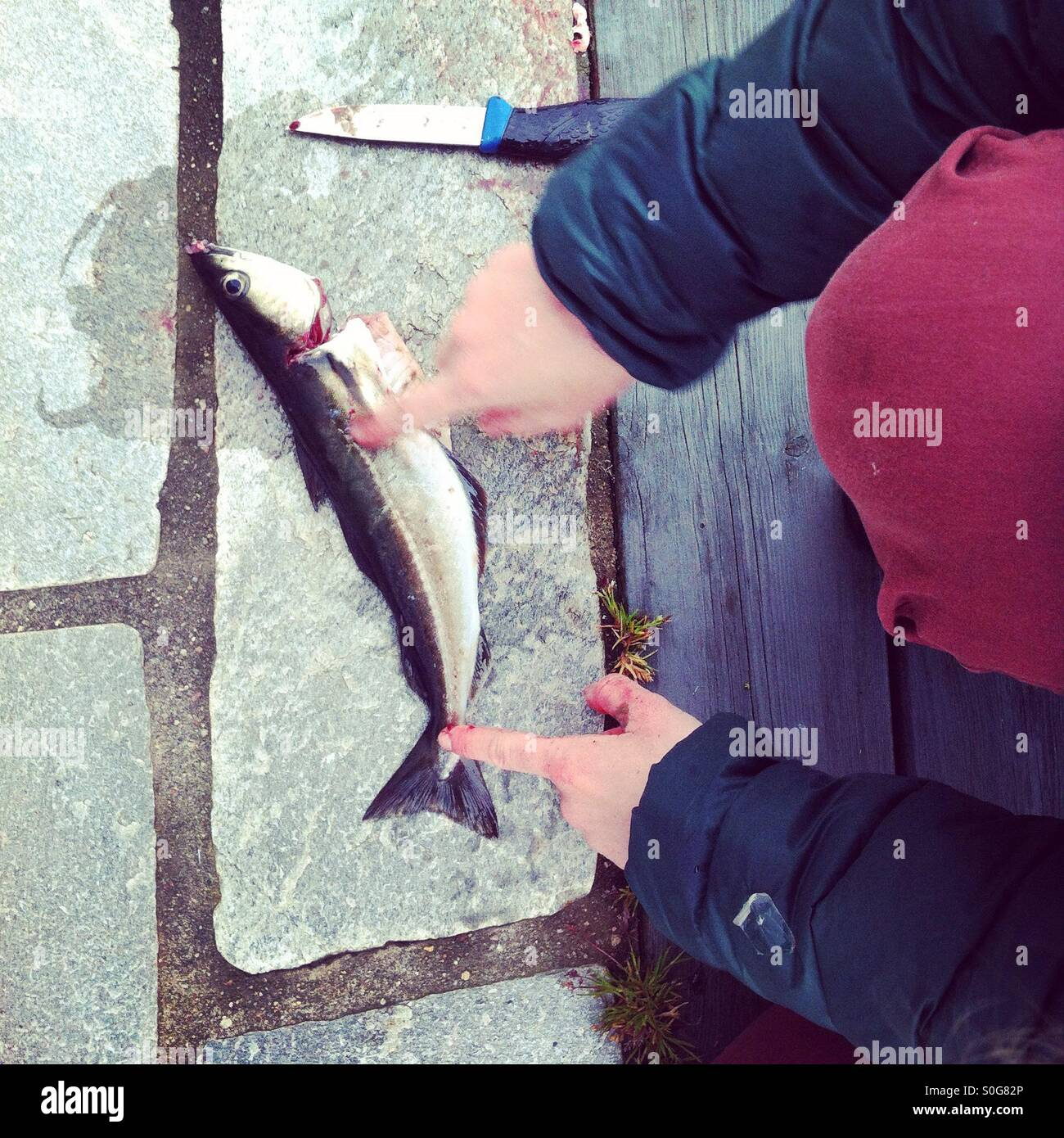 Girl pointing at fish, showing how to gut an fillet. - Stock Image