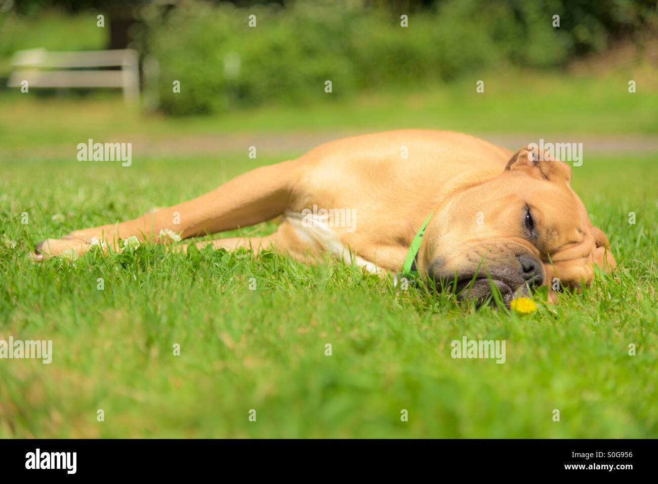 Just chillin' - Stock Image
