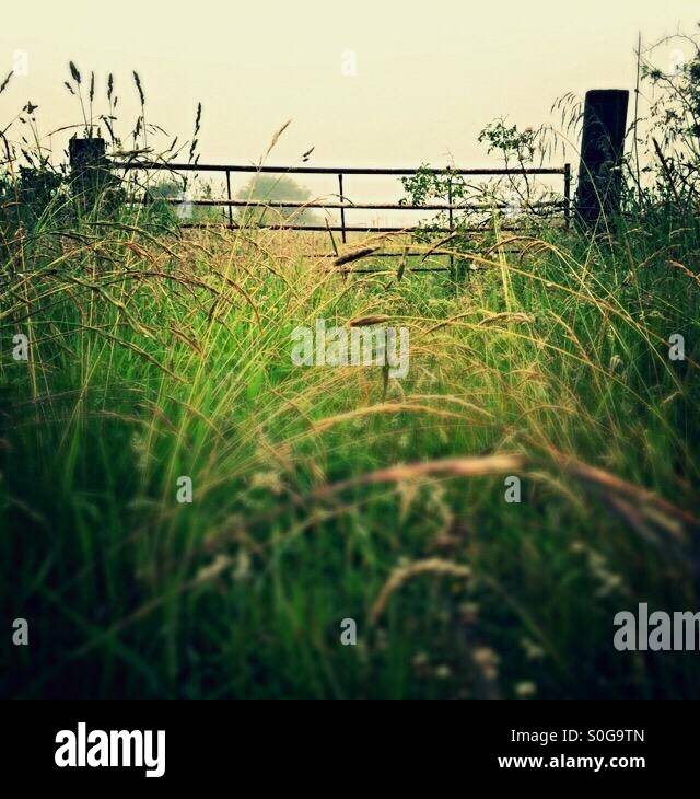 Gate through the long grass on a misty morning - Stock Image