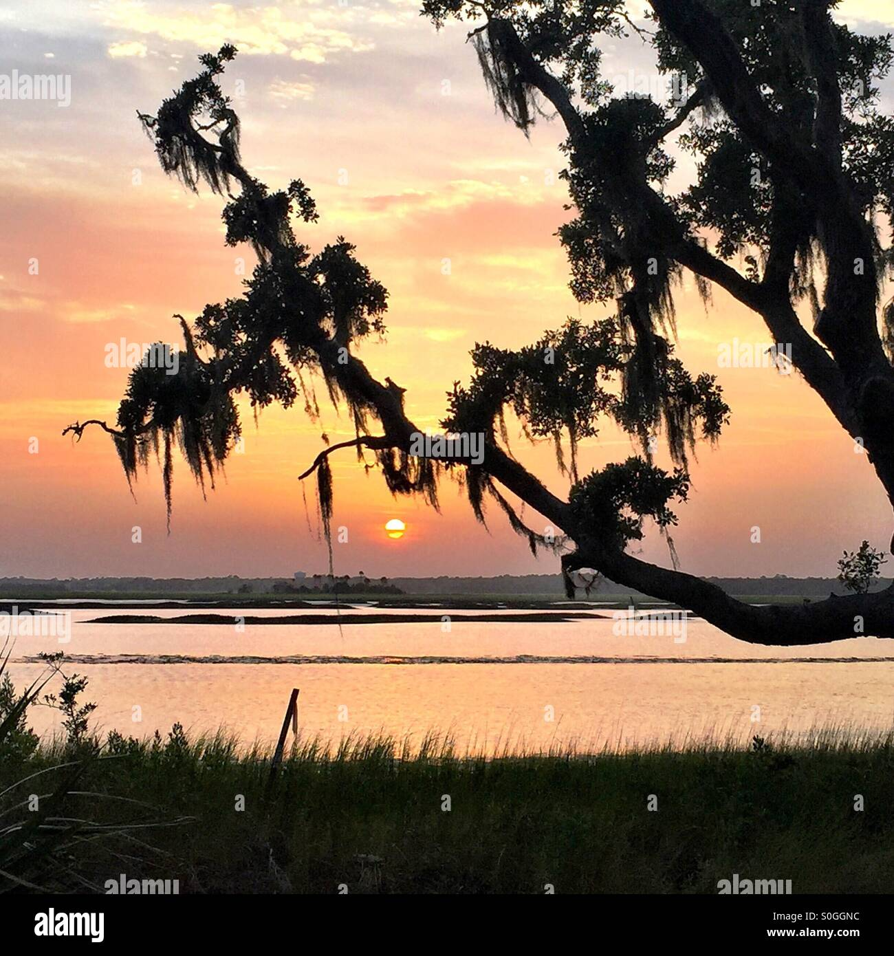 The silhouette of a live oak tree draped with Spanish moss stands out against a beautiful sunset sky in South Carolina. - Stock Image