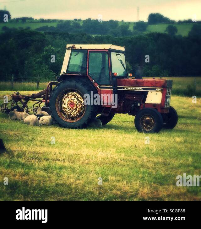 An old tractor sits in the field with sheep settled down for the evening round the rear wheel - Stock Image