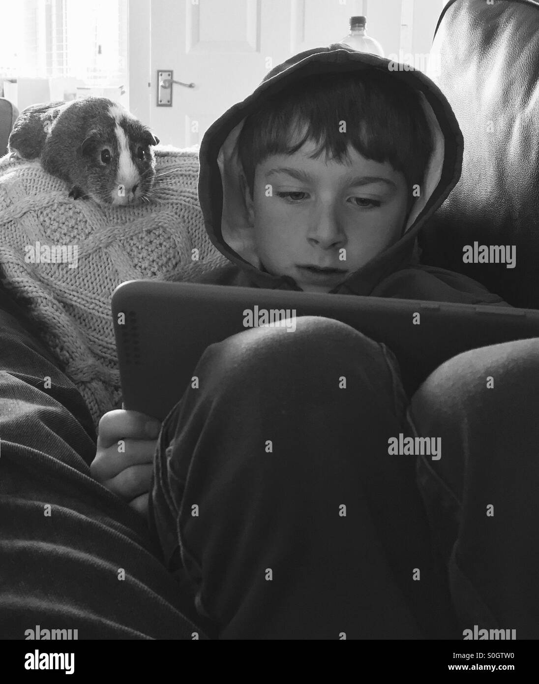 Boy and his guinea pig watching film on tablet computer - Stock Image