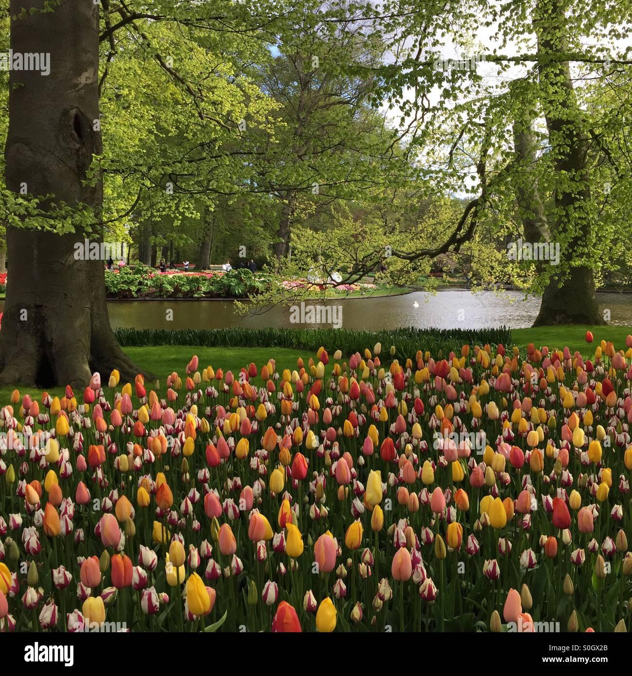The most beautiful spring garden - Keukenhof! Stock Photo: 310158307 ...