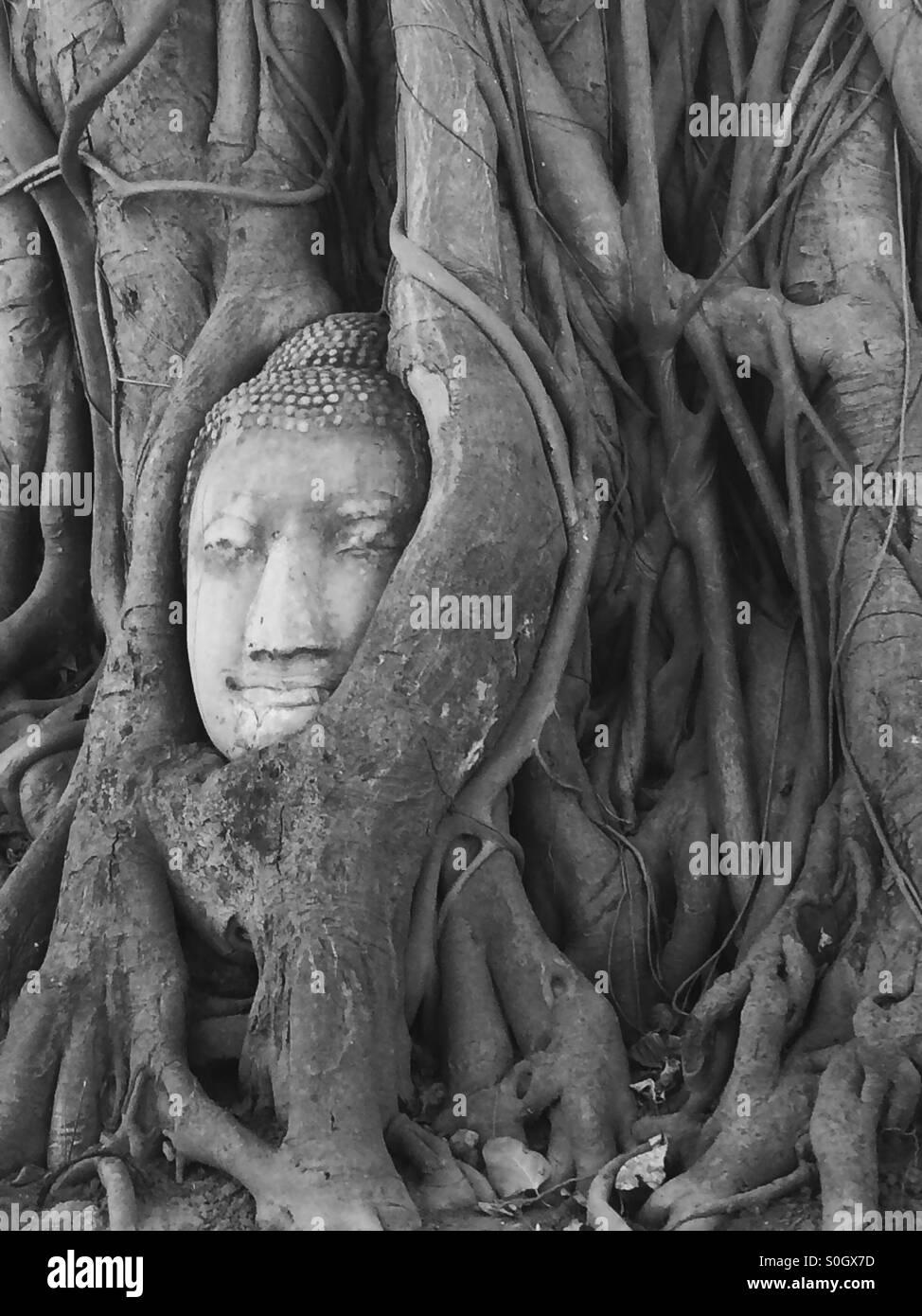 Stone Buddha head entwined in tree roots, Wat Mahathat, Ayutthaya, Thailand. Stock Photo