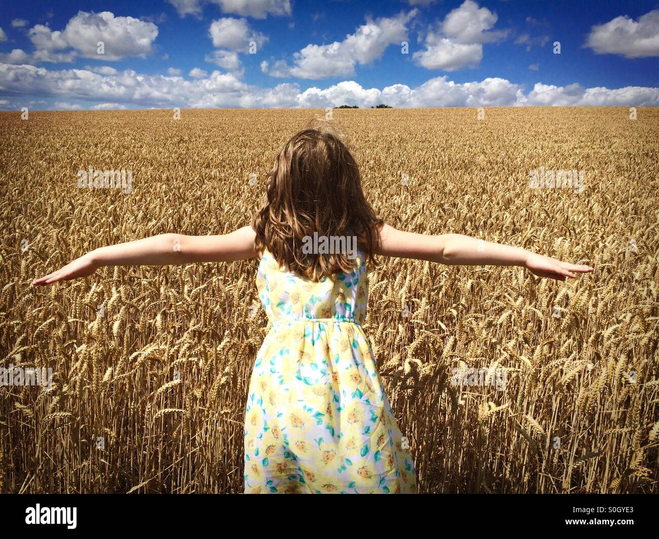 Girl in Cornfield - Stock Image