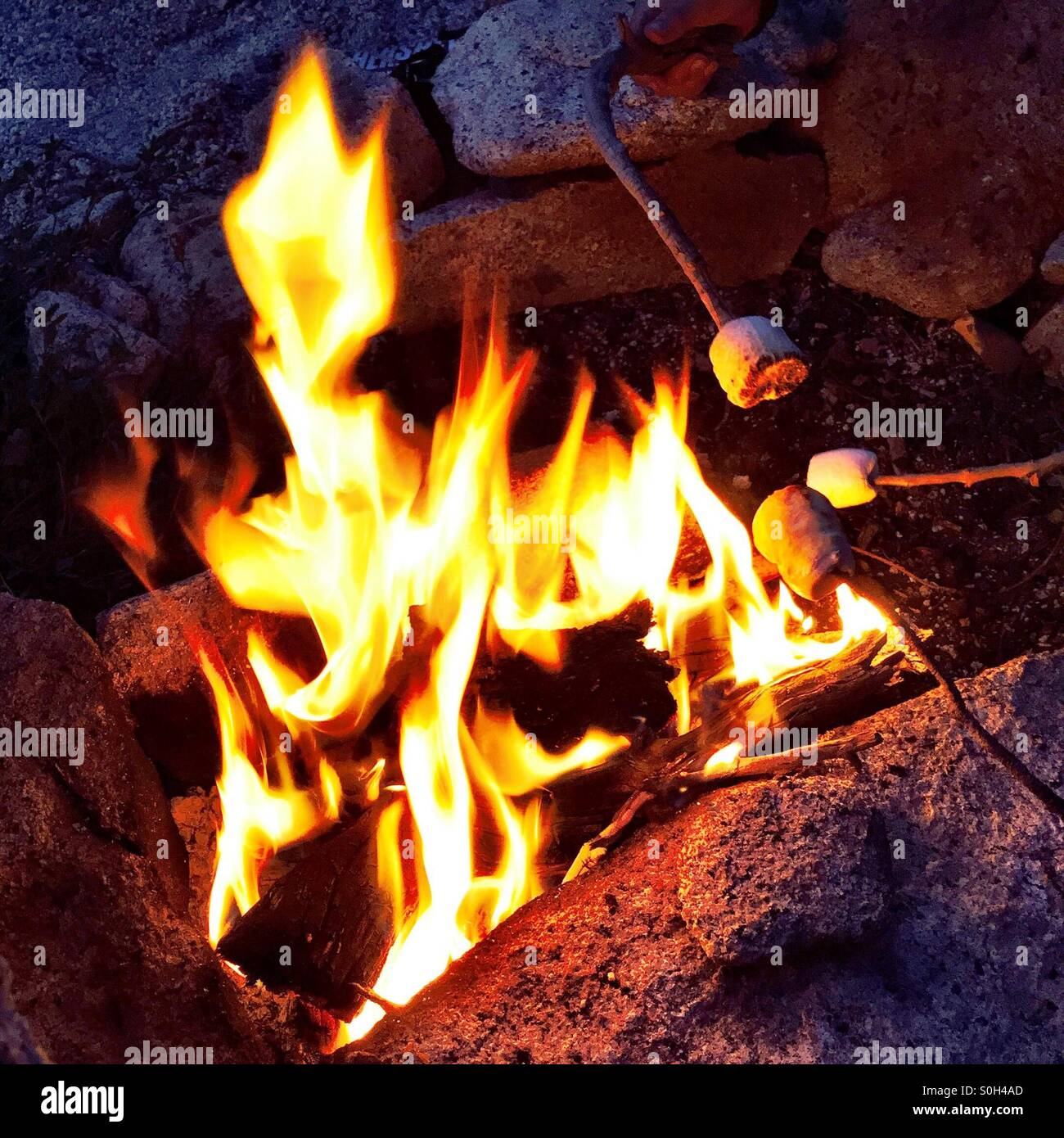 Roasting Marshmallows Over An Open Campfire