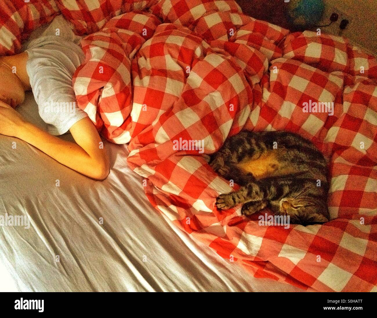 A cat and a boy sleeping on a bed - Stock Image