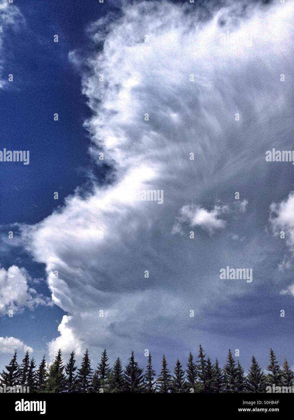The edge of a large Cumulonimbus cloud above a line of fir trees. Calgary, Alberta, Canada. July 2015. - Stock Image