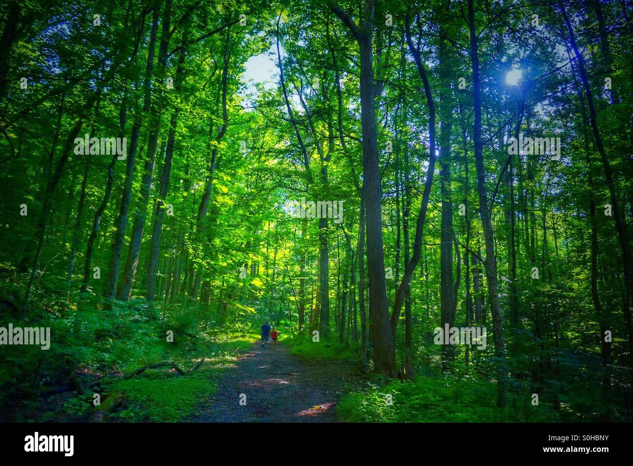 Waking in the woods - Stock Image