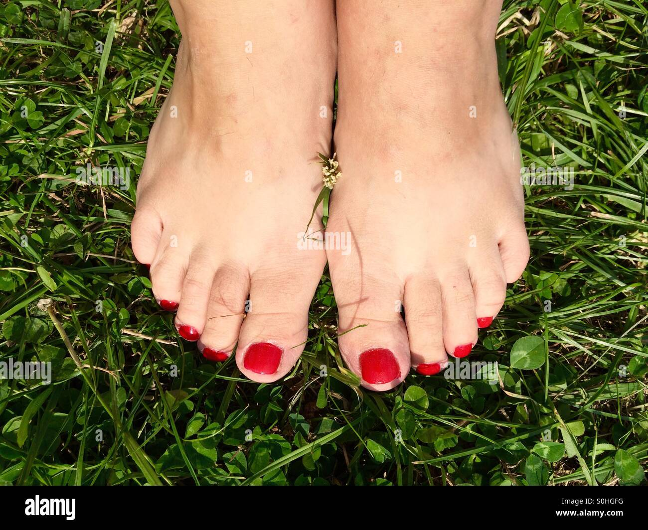 Woman's feet with red nailpolish bare on the grass - Stock Image