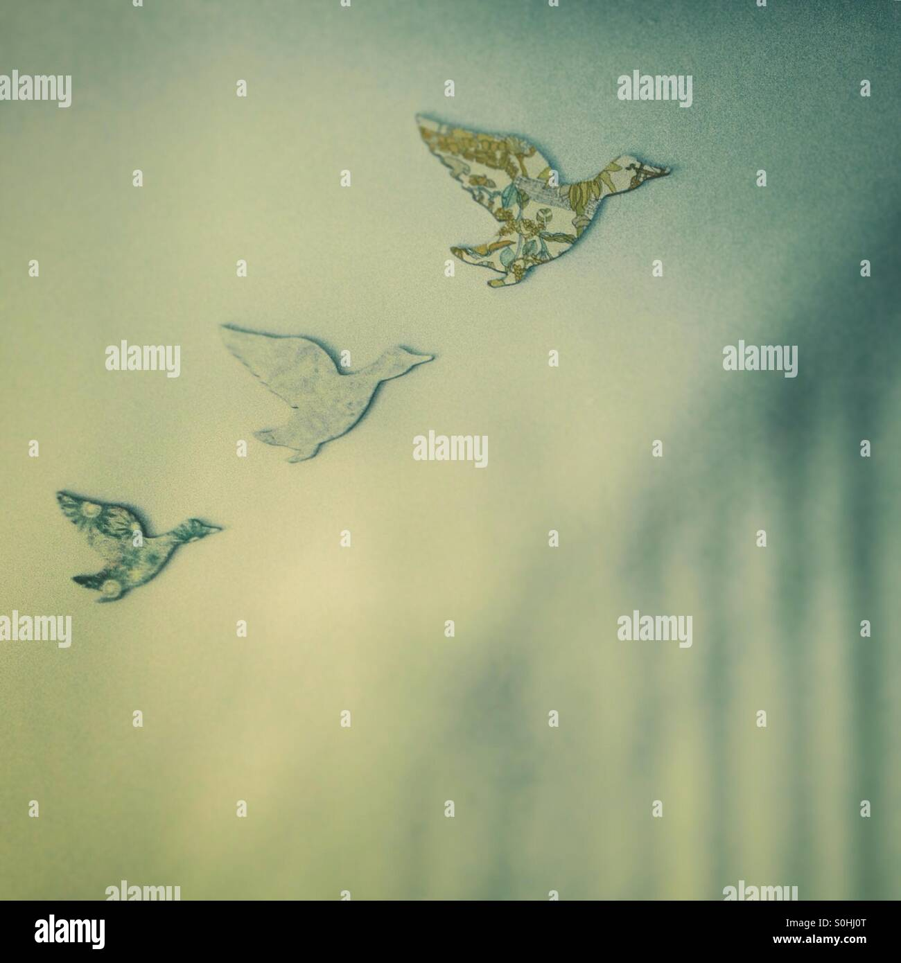 Three Flying Ducks On Wall Stock Photos & Three Flying Ducks On Wall ...