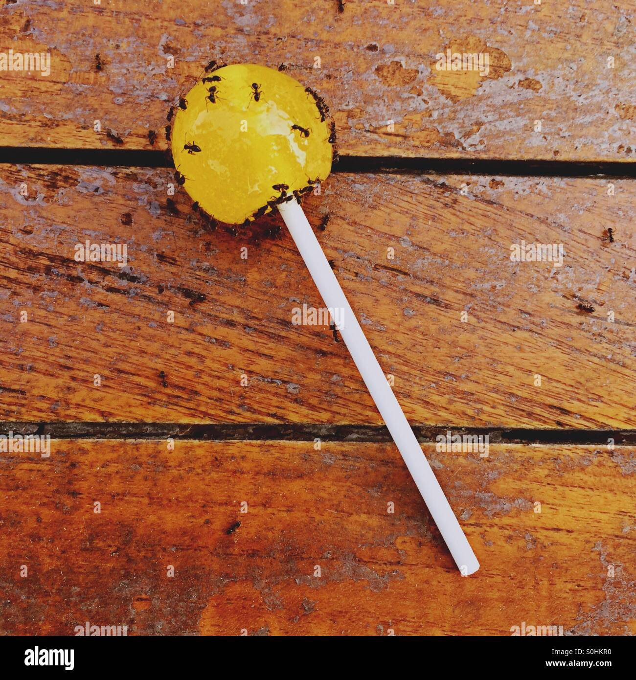 Lemon Lollipop covered in ants on a wooden table Stock Photo
