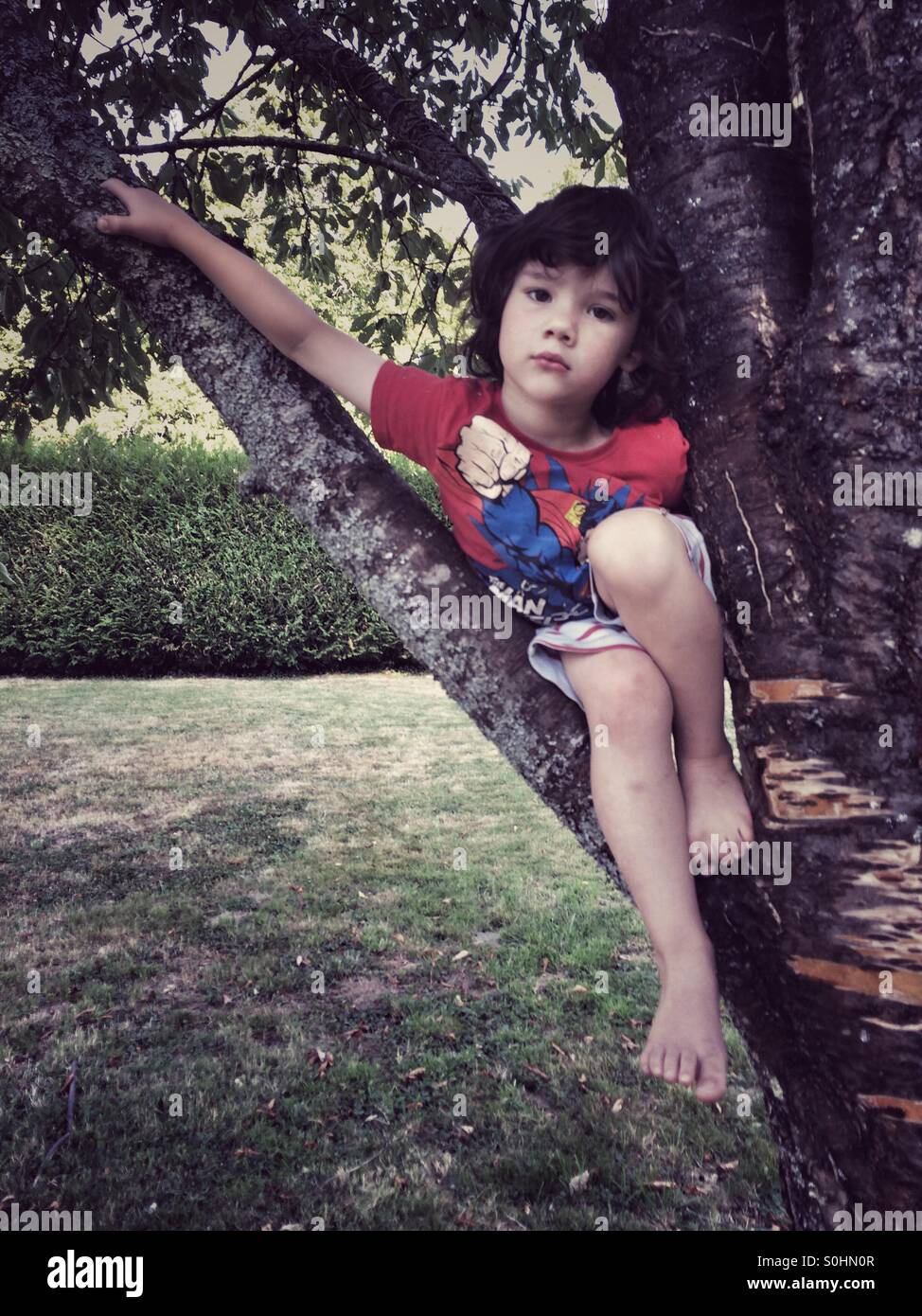 Four year old boy in tree - Stock Image