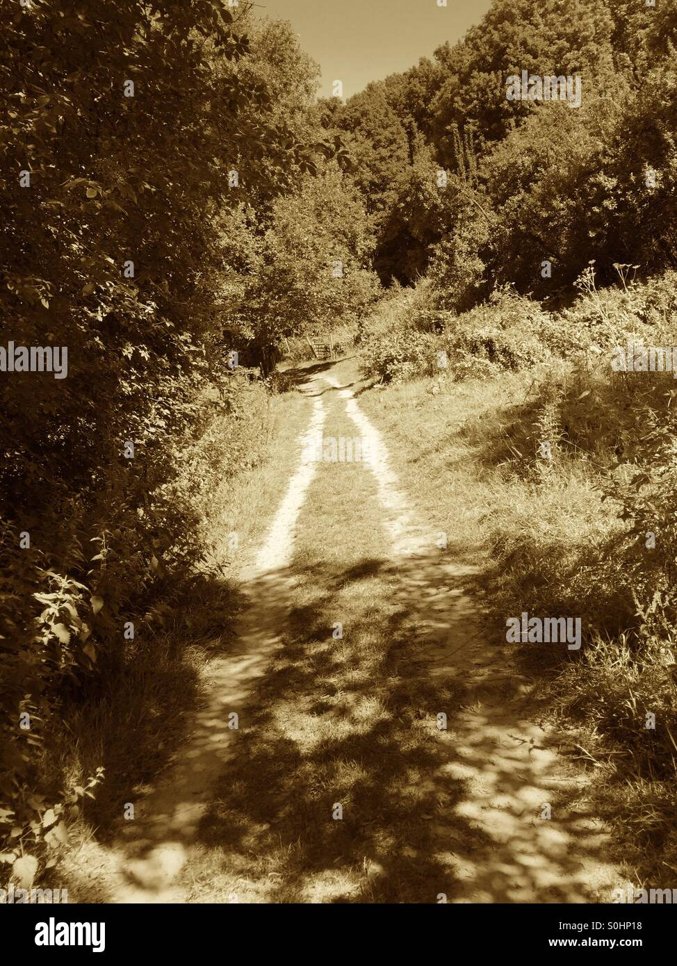 Country walk with sepia tones - Stock Image