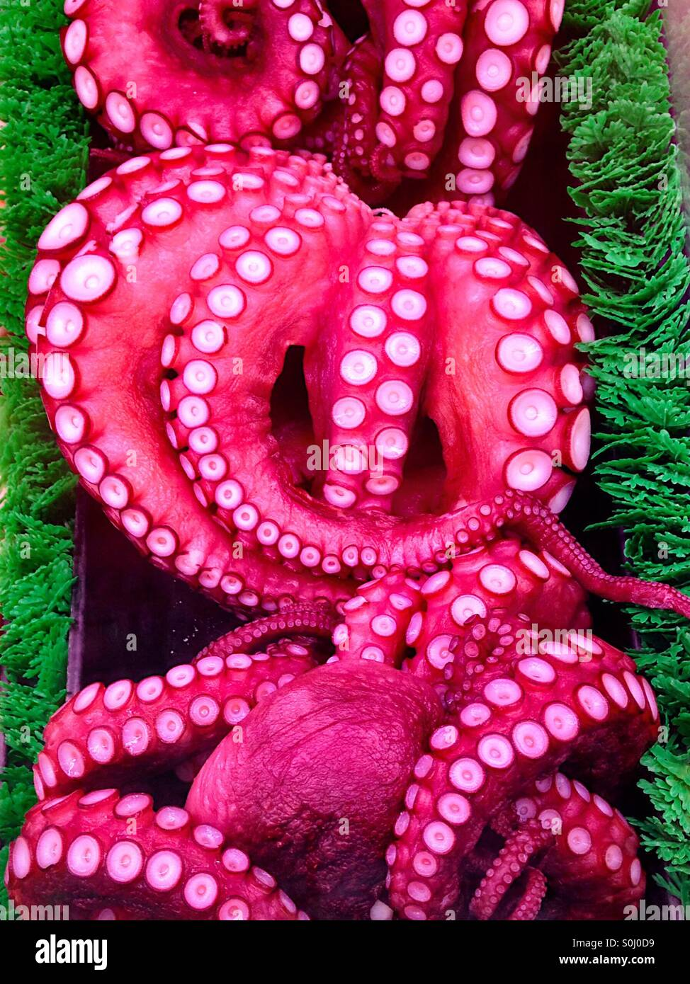 Fresh octopus in a market display - Stock Image