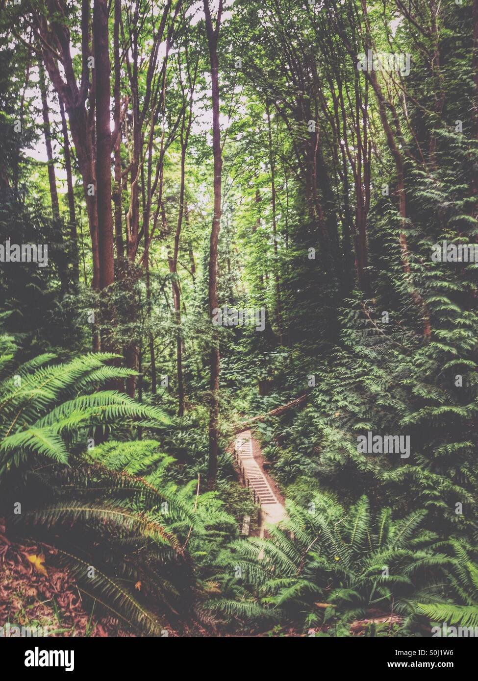 Into the woods - Stock Image