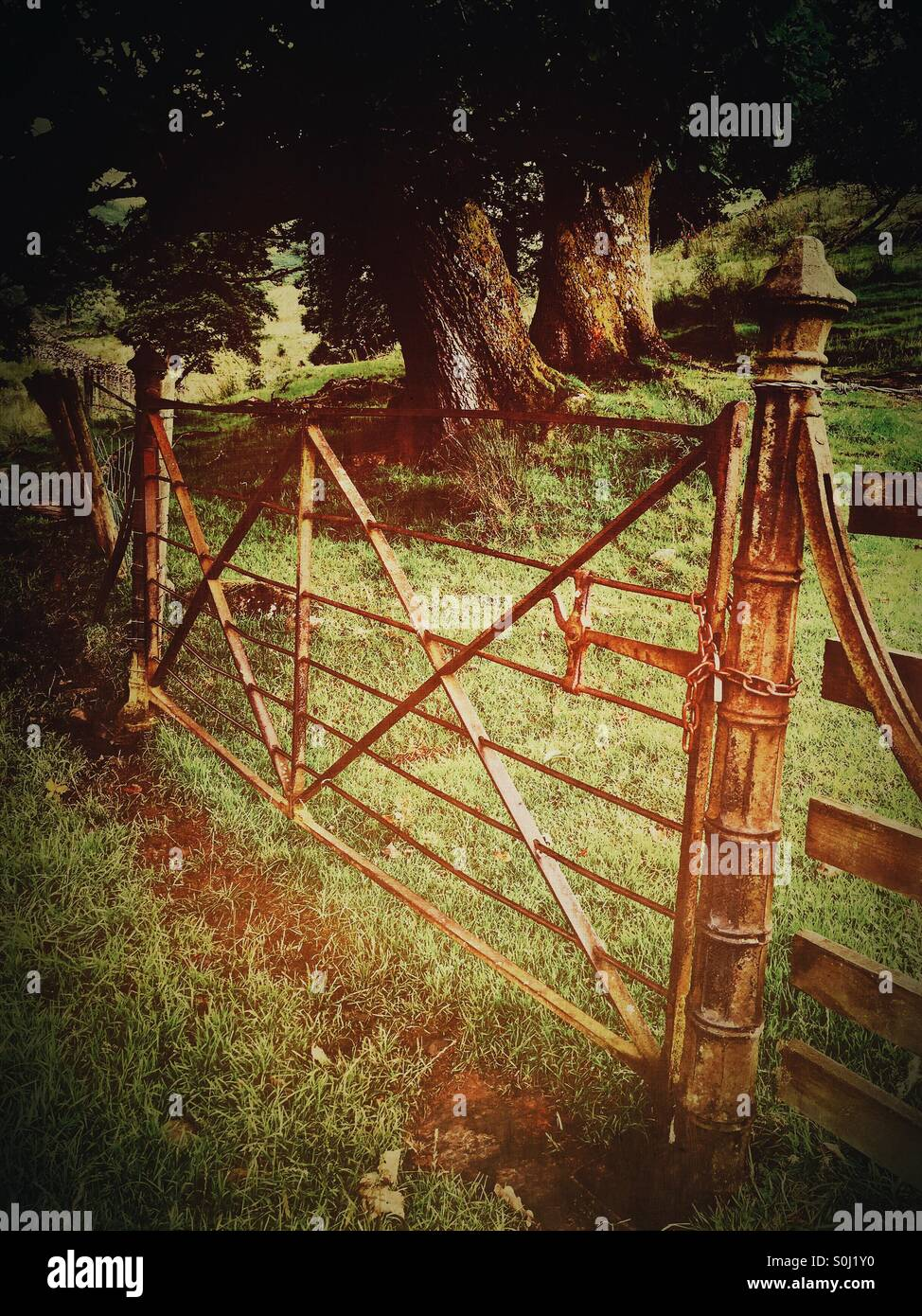 Ornate Victorian farm gate - Stock Image