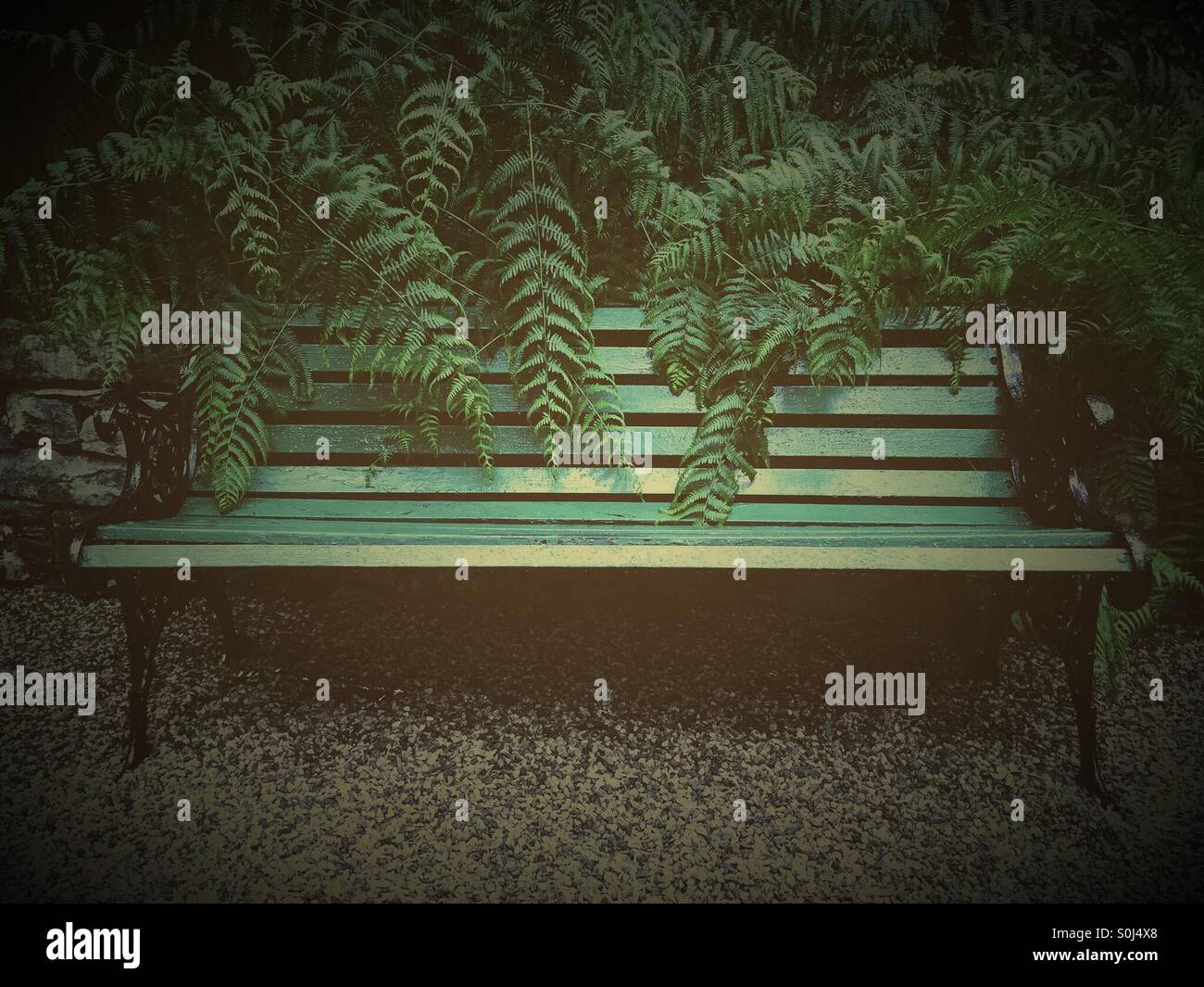 Green bench hidden in the ferns - Stock Image