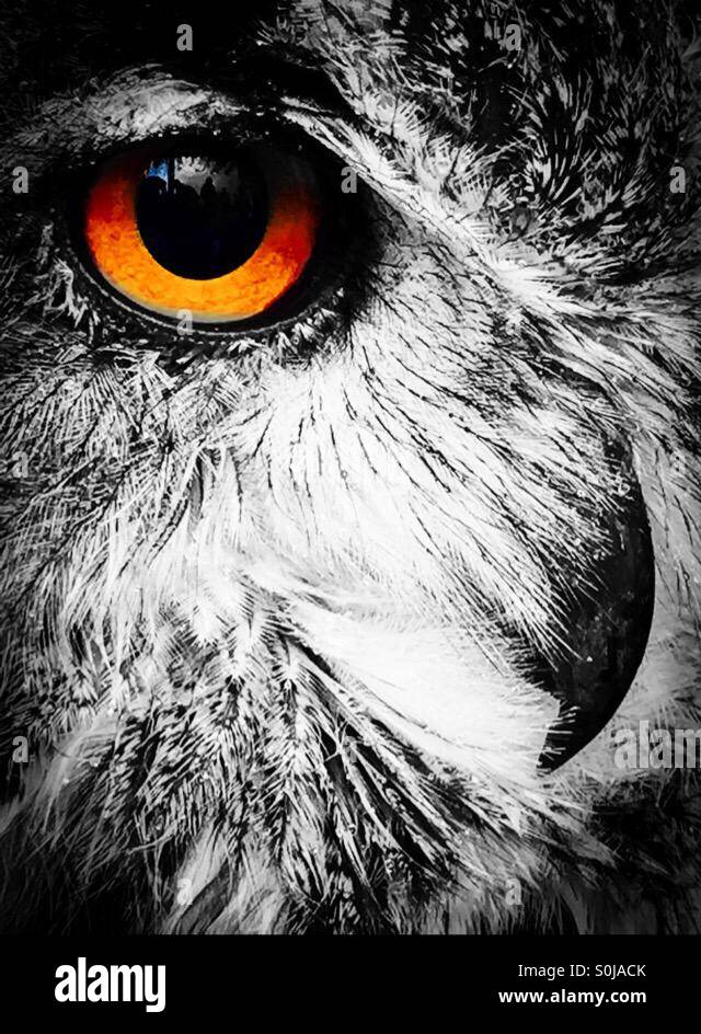 Close Up Owl Face Sketch Black White Framed Canvas Art By Pied